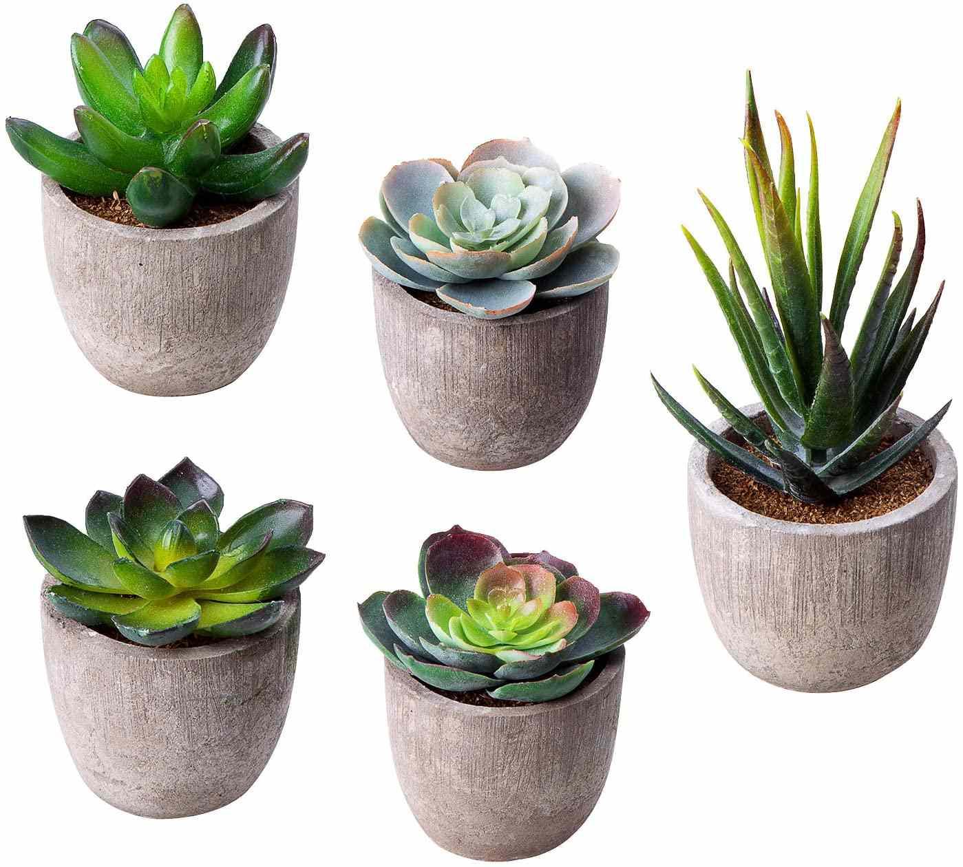 Artificial Succulent Plants, Set of 5