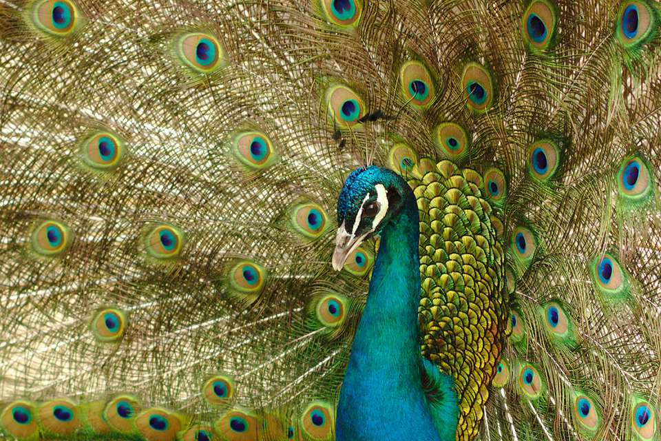 20 Bird Idioms Explained Clever Bird Sayings