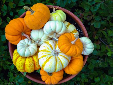 How To Grow And Care For Pumpkins