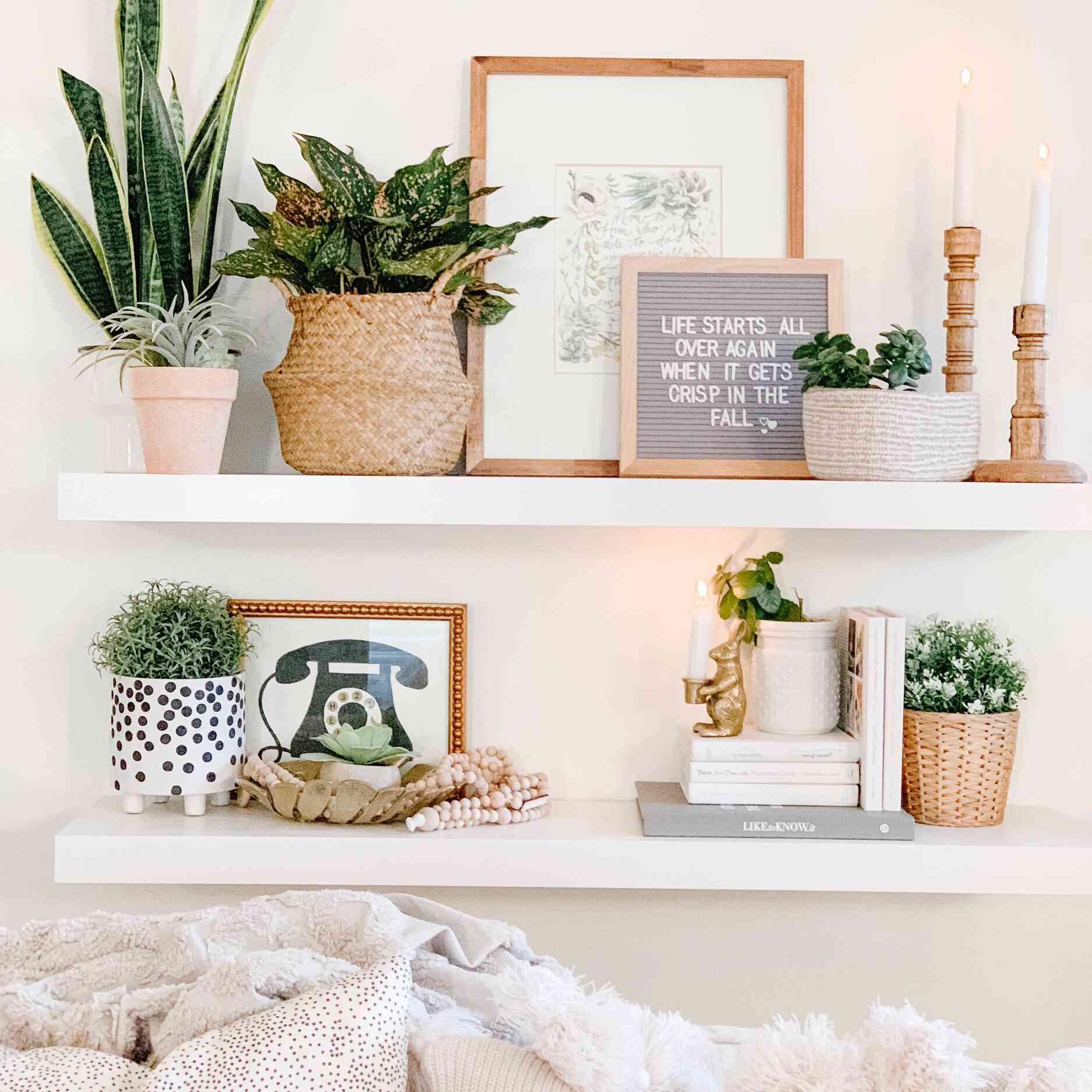 Brittany Robertson plant shelf