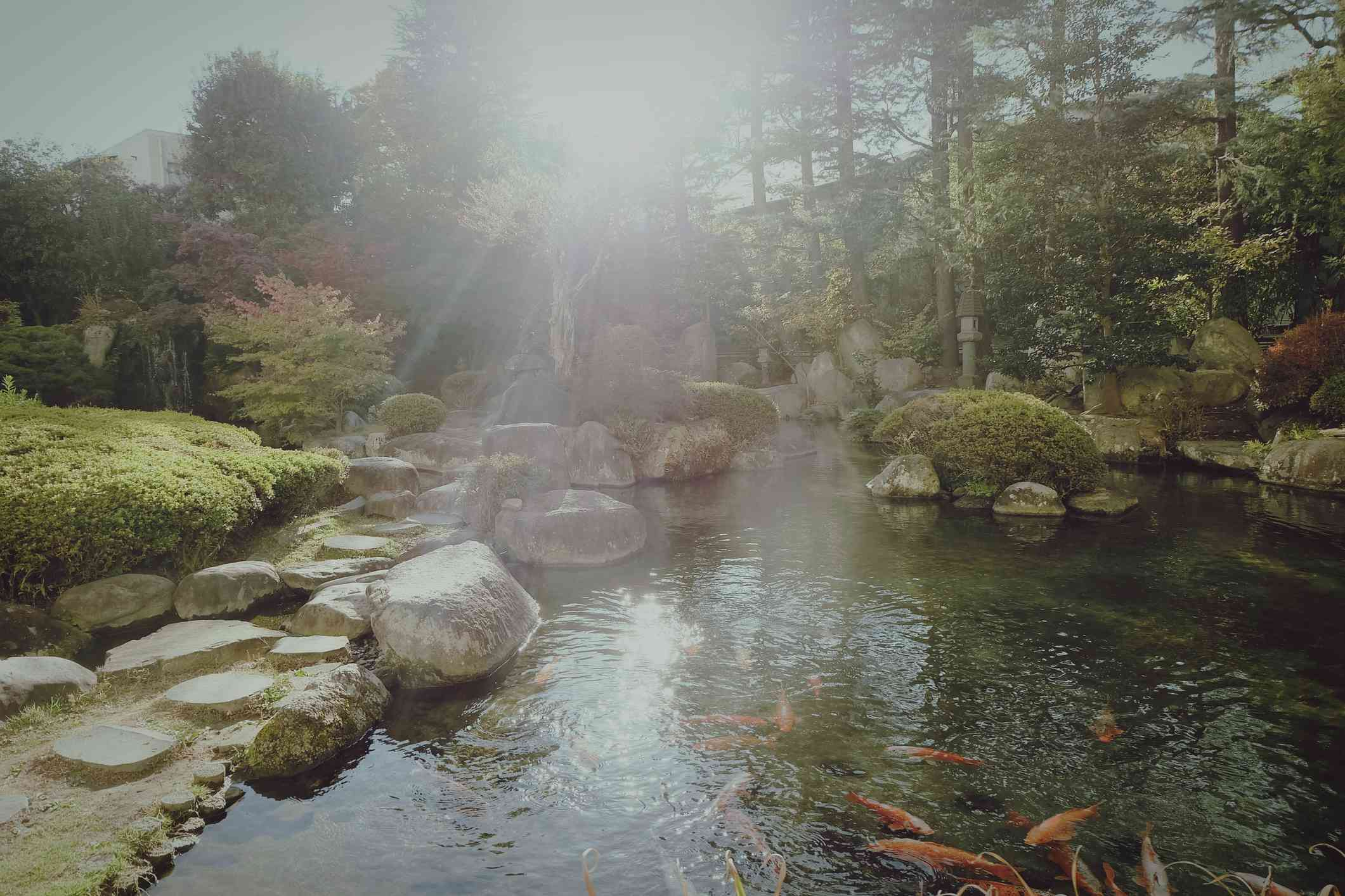 Koi pond bordered by rocks.