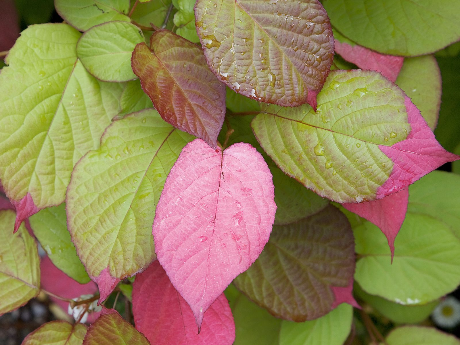Top 6 Choices For Vines And Climbing Plants