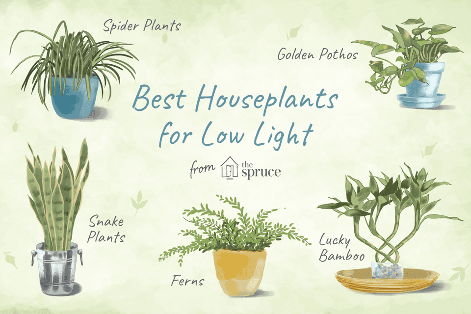 Best Houseplants for Low Light Illustration