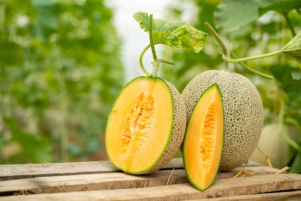 Sliced and whole cantaloupe with leaves on wooden bench.