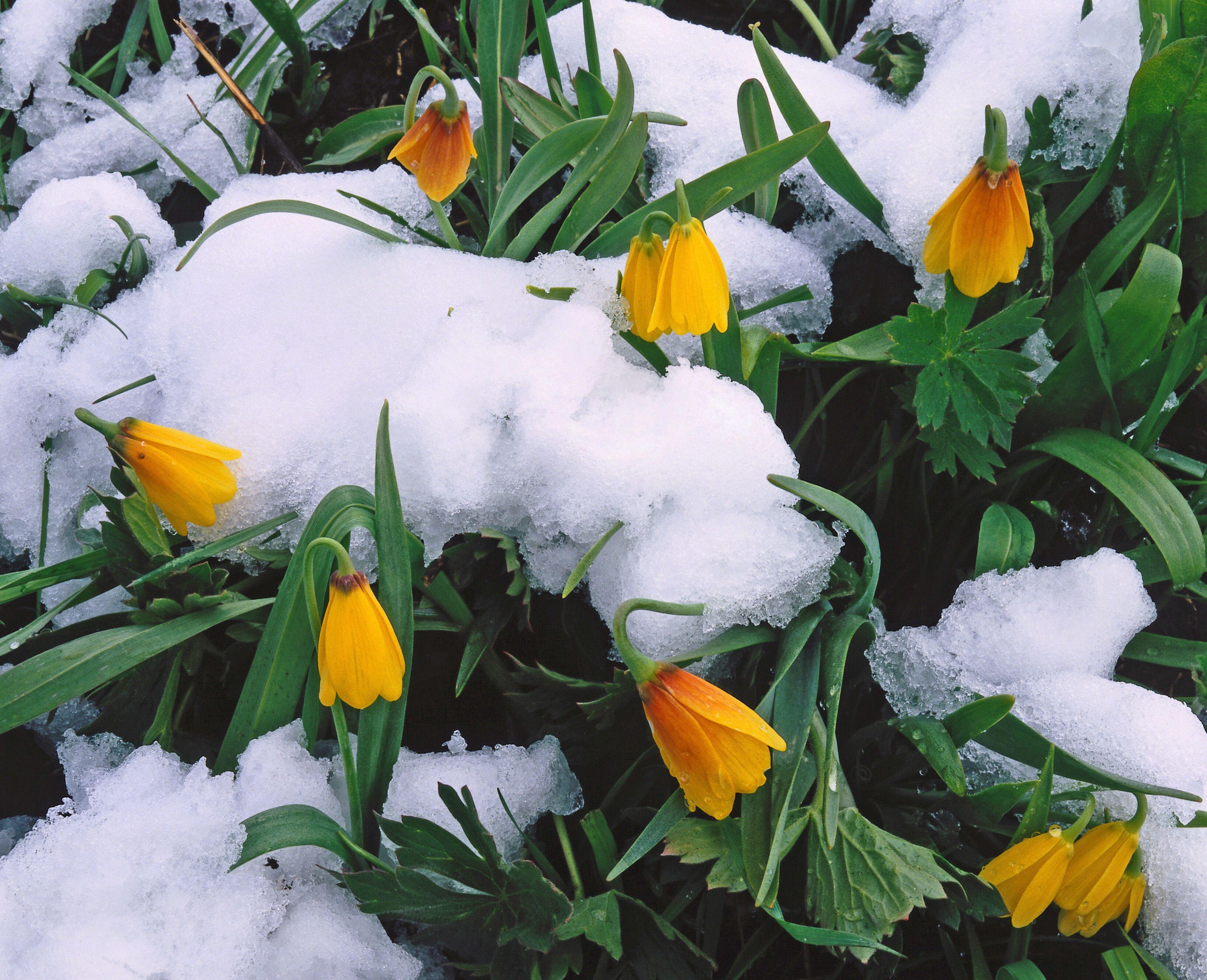 20 Top Spring Flowering Ephemerals