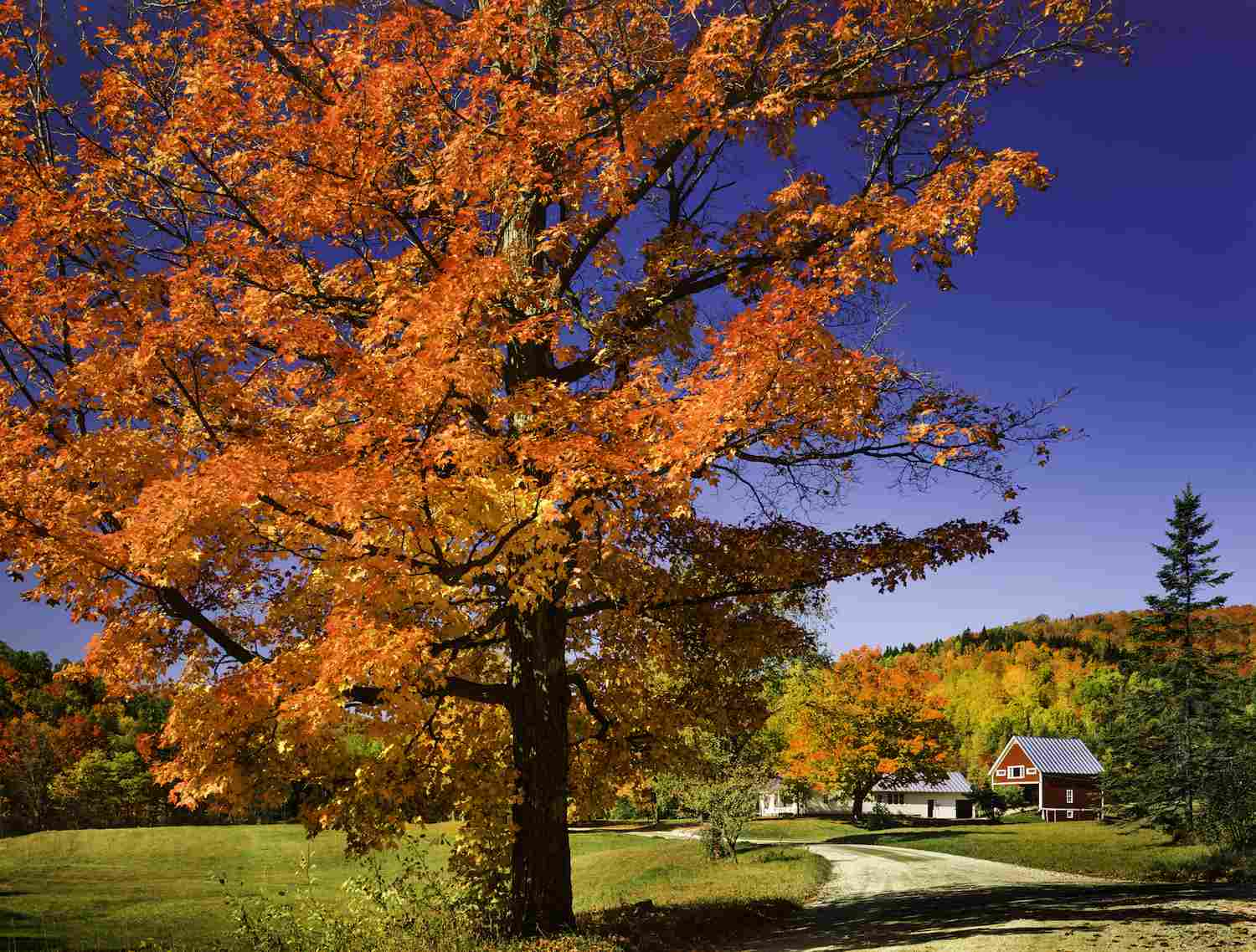 Attract Buyers With Colorful Fall Landscaping Ideas