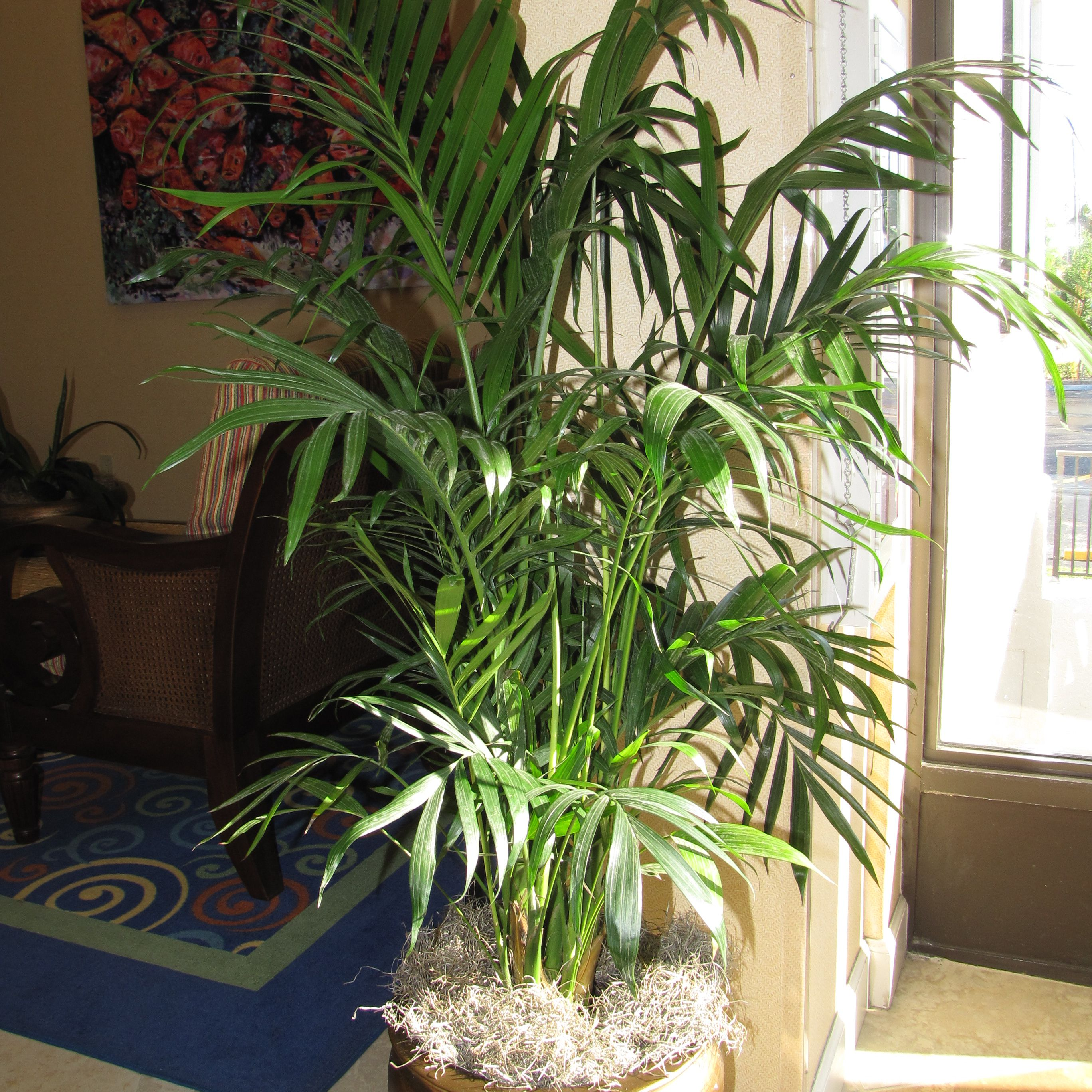 Palm Plants For Indoors: Types Of Indoor Palm Plants To Grow