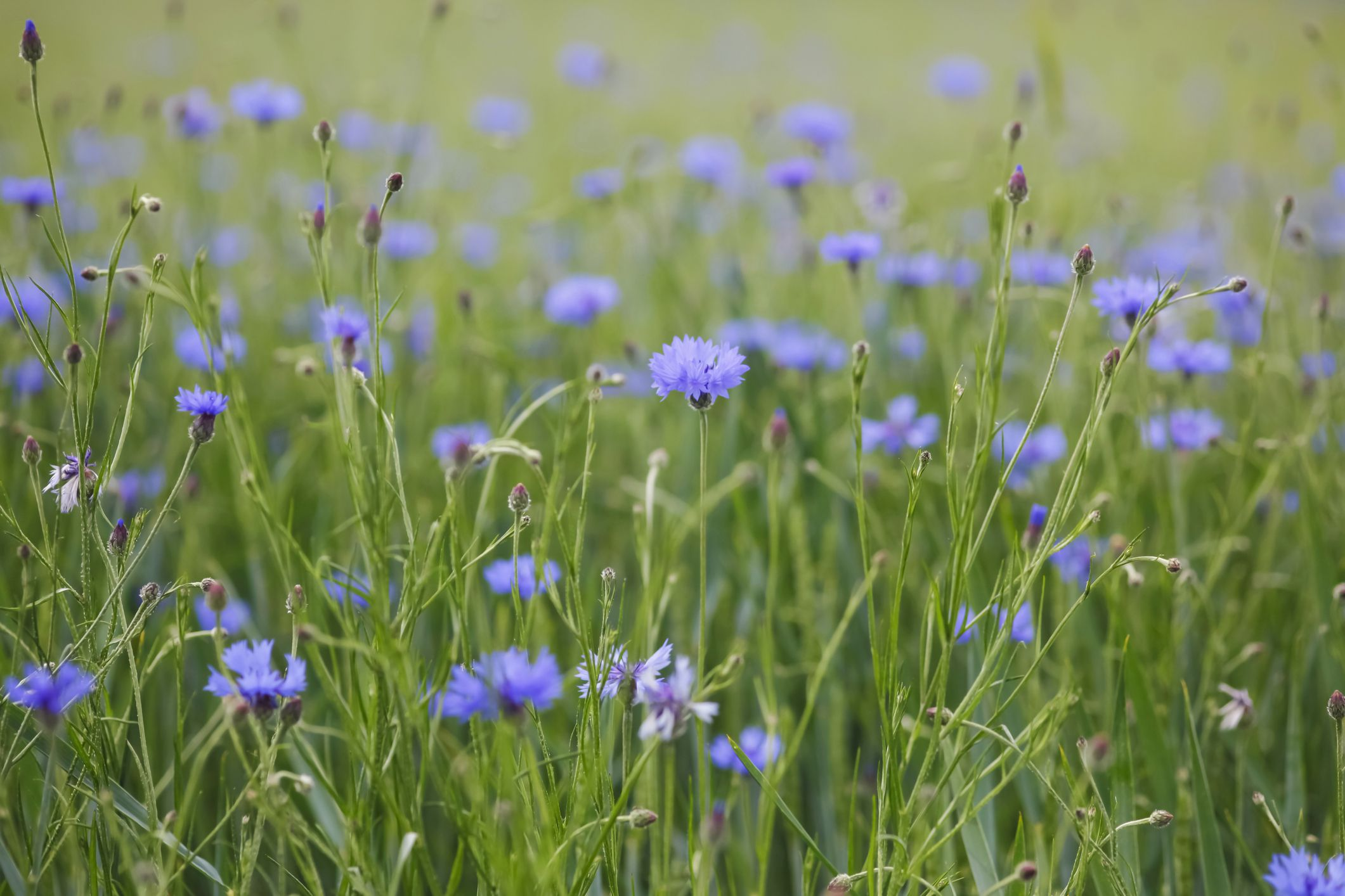 13 Types Of Wildflowers For Summer Gardens
