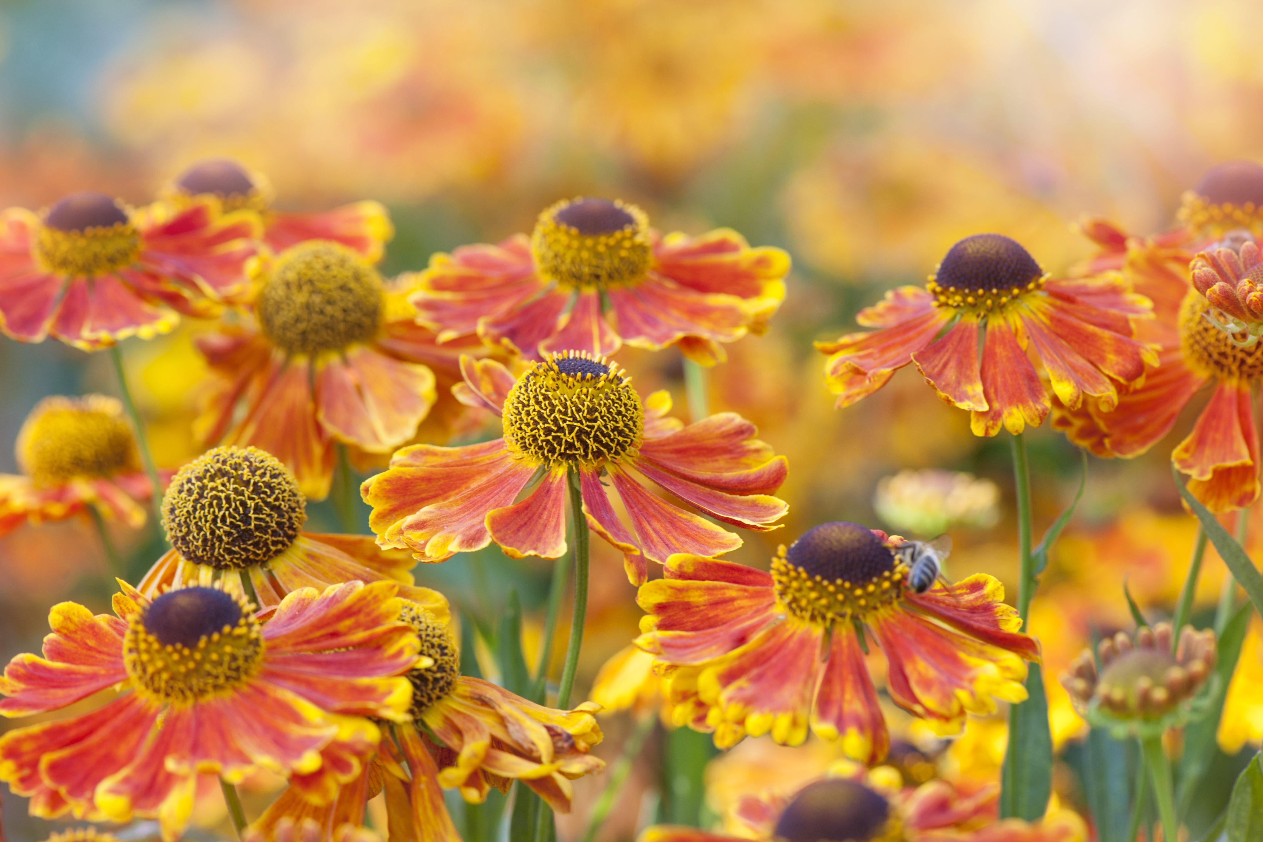 Perennial Cutting Garden Design