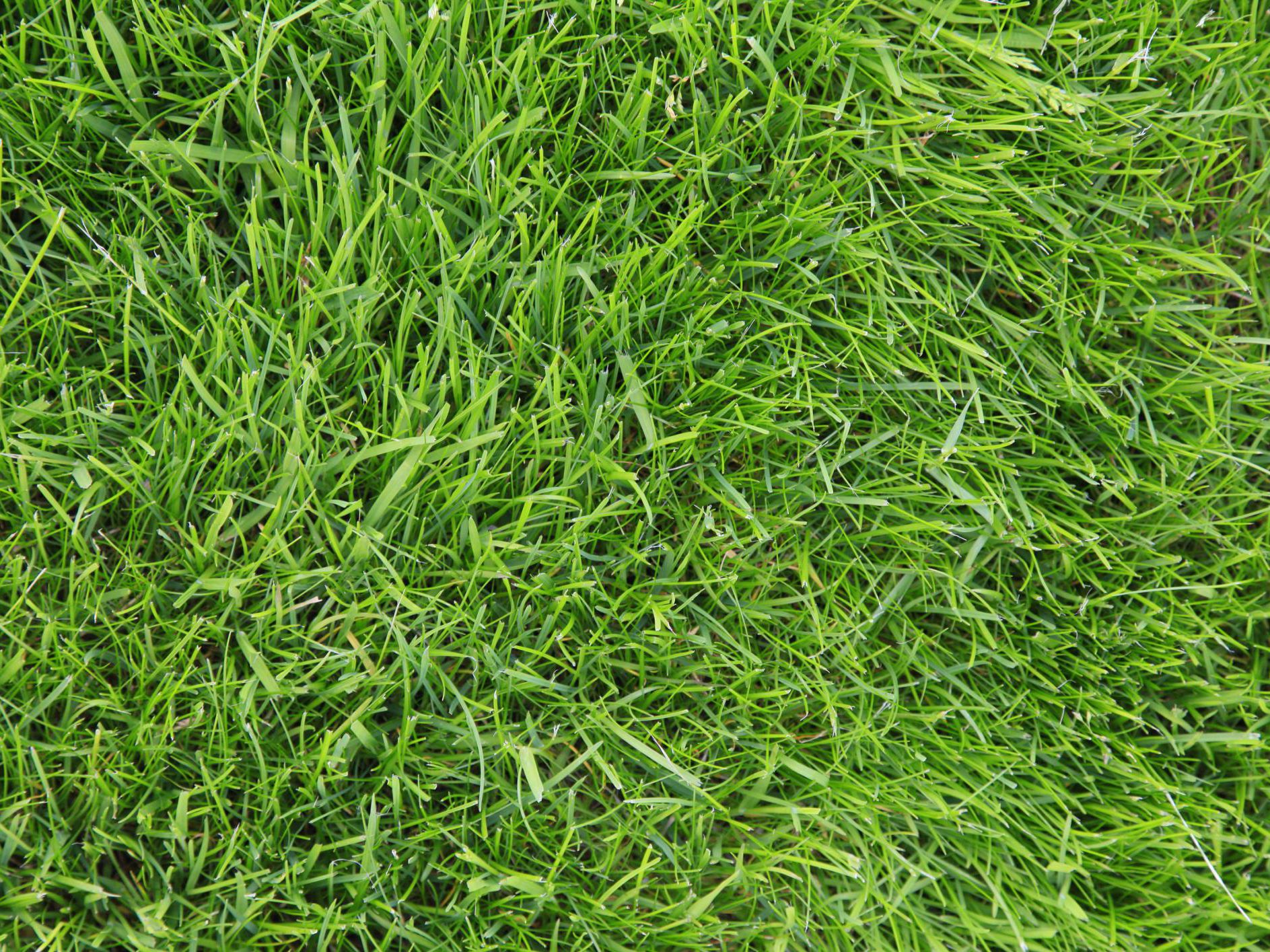 10 best types of drought-tolerant lawn grass