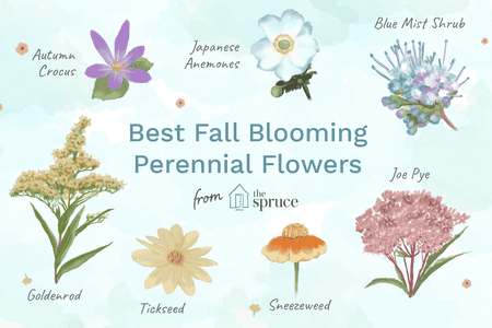 keeping your perennial garden glorious into fall with fall plants - Fall Garden Plant