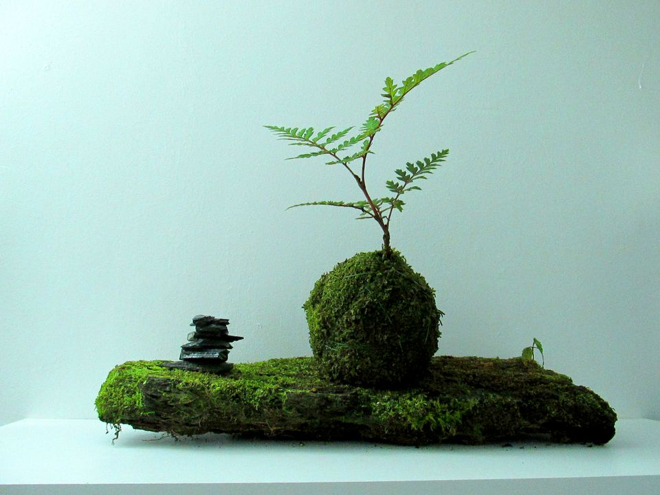 Kokedama on a table against a wall.