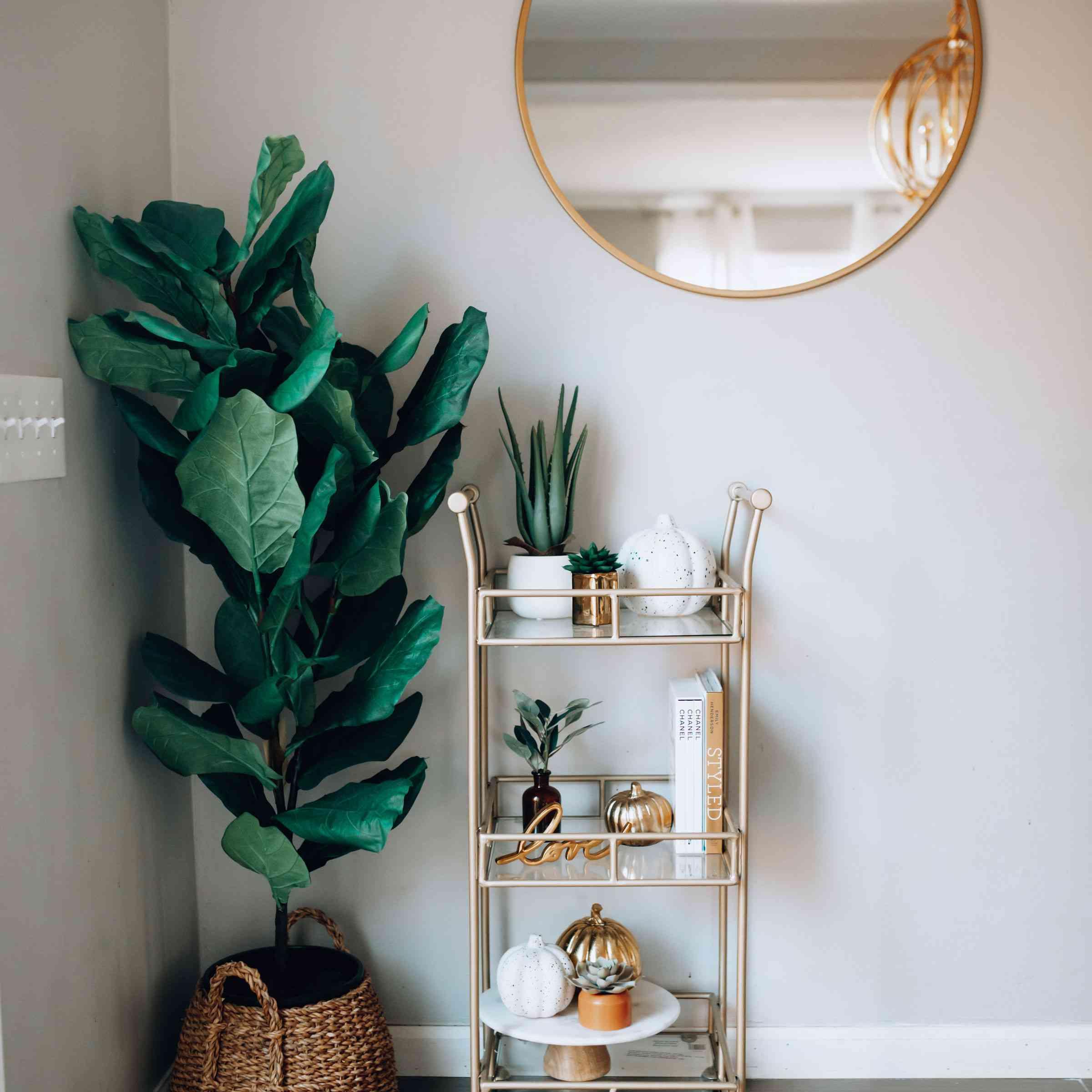 Shannon plant shelf