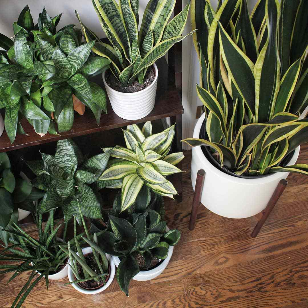 Green plants on hardwood floor