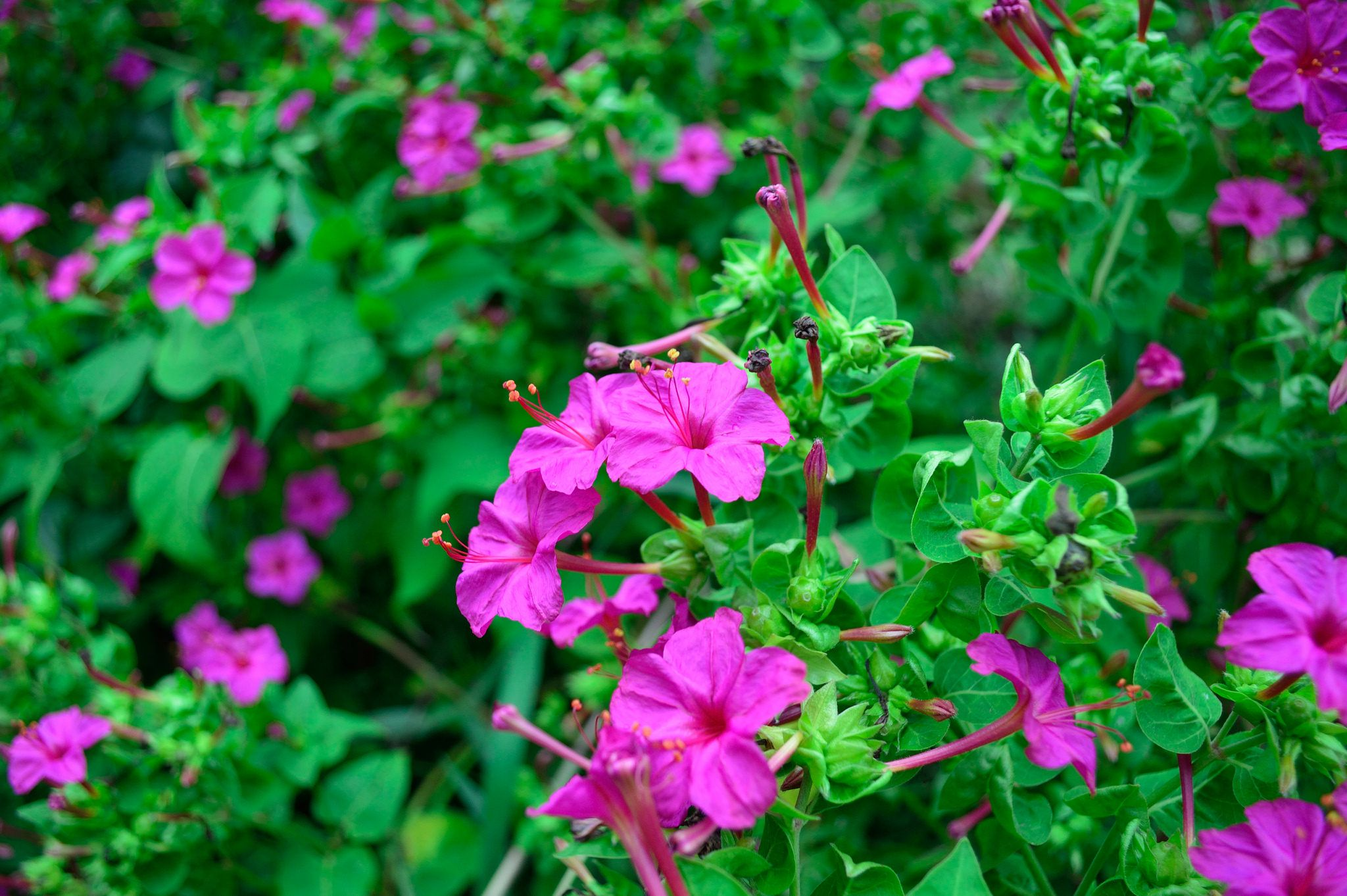 16 Plants That Smell Best At Night