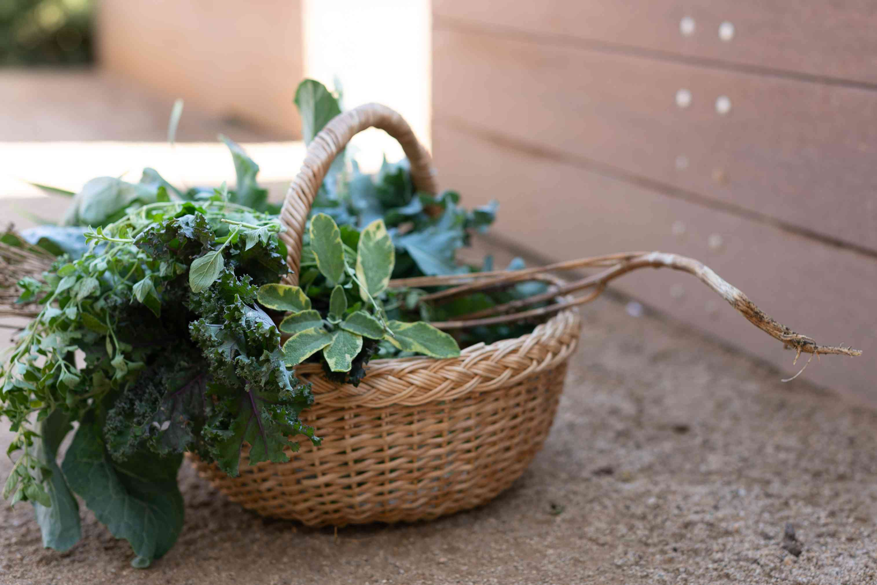 Round wicker basket with vegetable greens for harvest inside