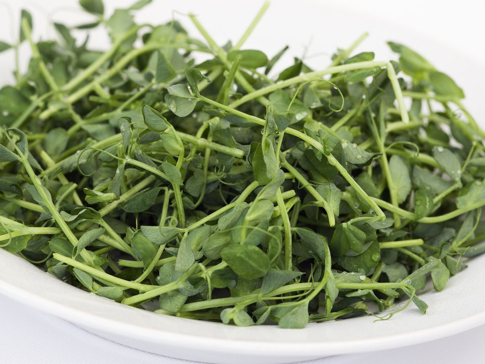 Pea Shoots and Tendrils