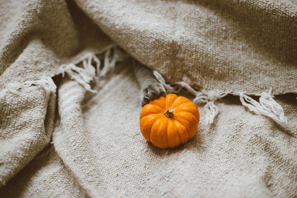 Cat paw grabbing a mini pumpkin.