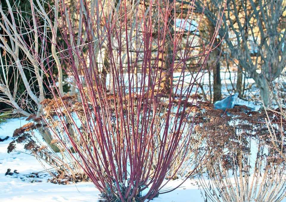 gardening in winter
