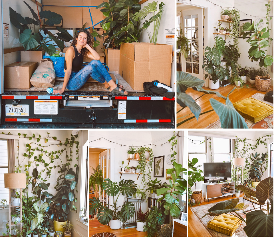 @JungleCasita and her gorgeous plant collection