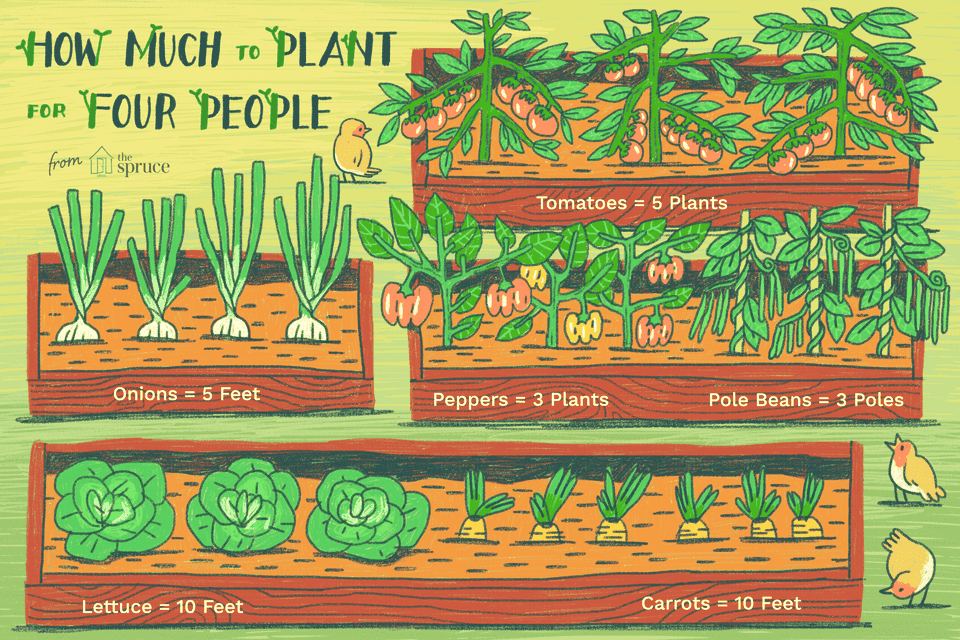 Illustration of how much food to grow in a garden
