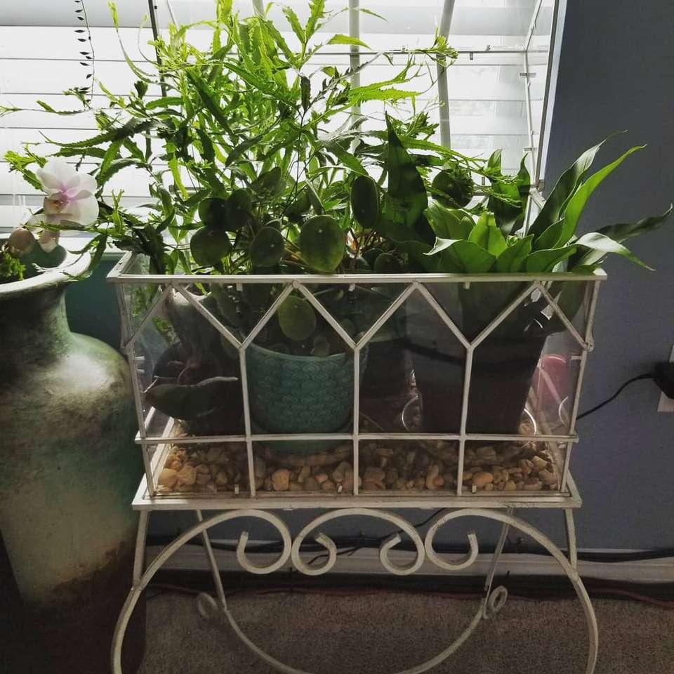 Terrario de pie con plantas