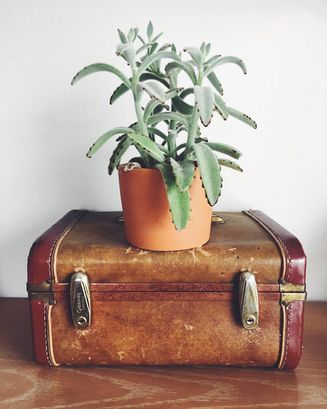 10 Creative Ways to Decorate with Vintage Suitcases b88c4c6a48386