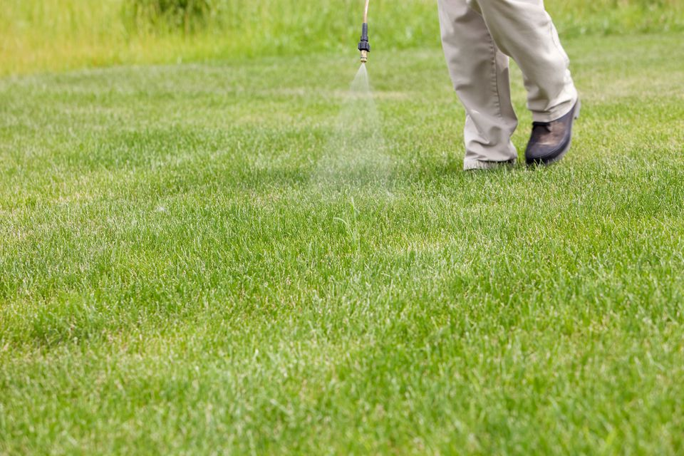 lawn care worker spraying crabgrass
