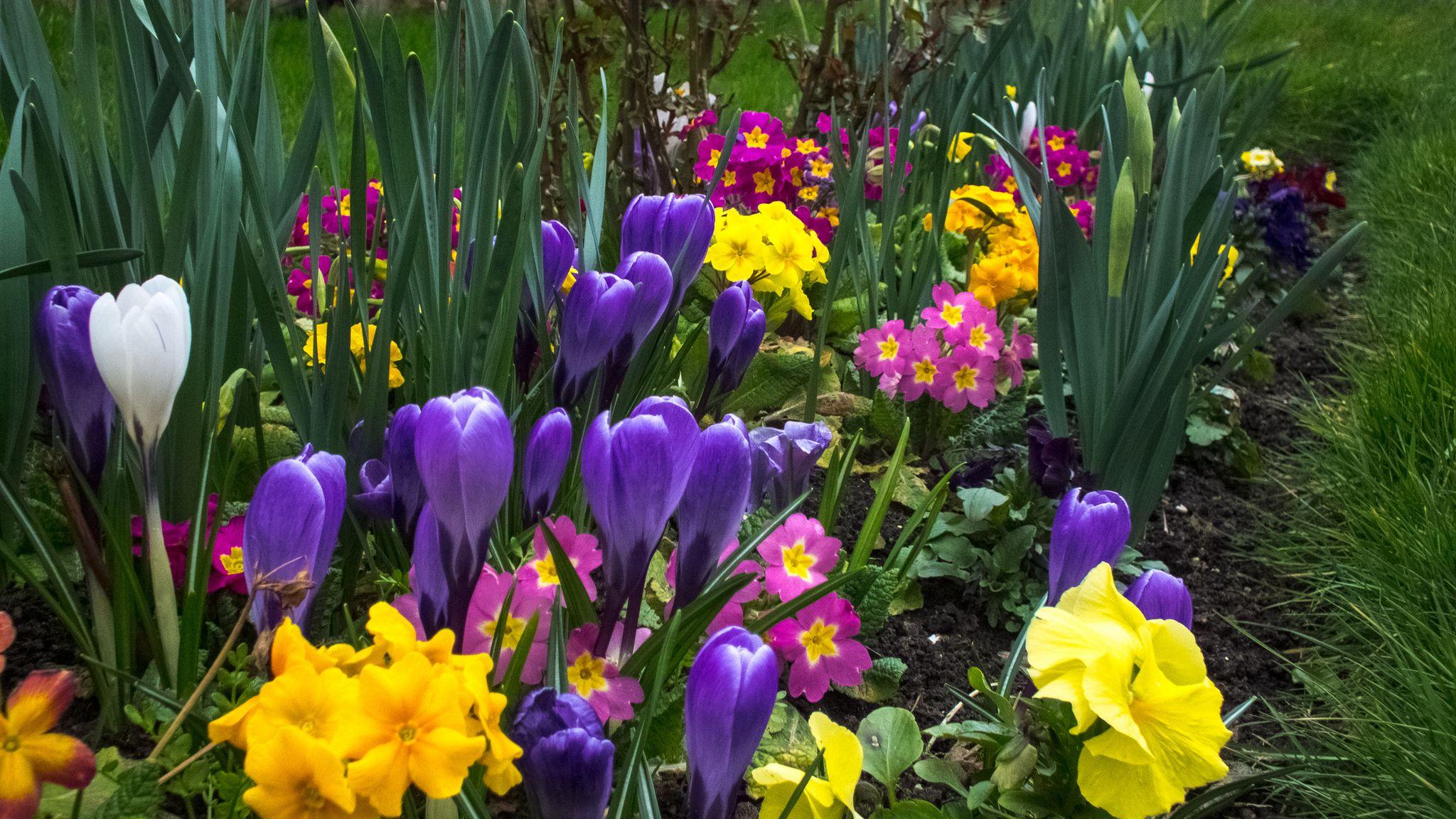 6 Tips For A Better Spring Flower Garden