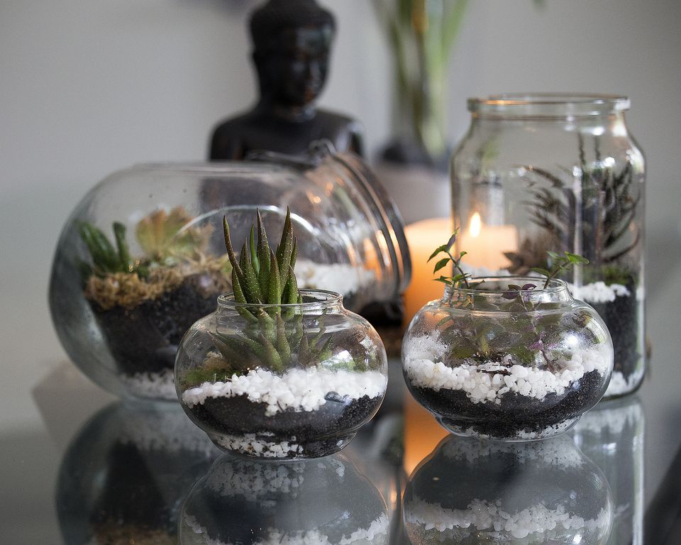 Several terrariums on a table