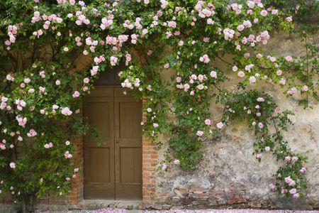 dd2f1fdaa The Top 10 Climbing Roses You Should Plant