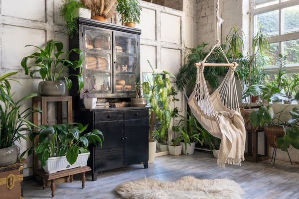 houseplant collection in an apartment