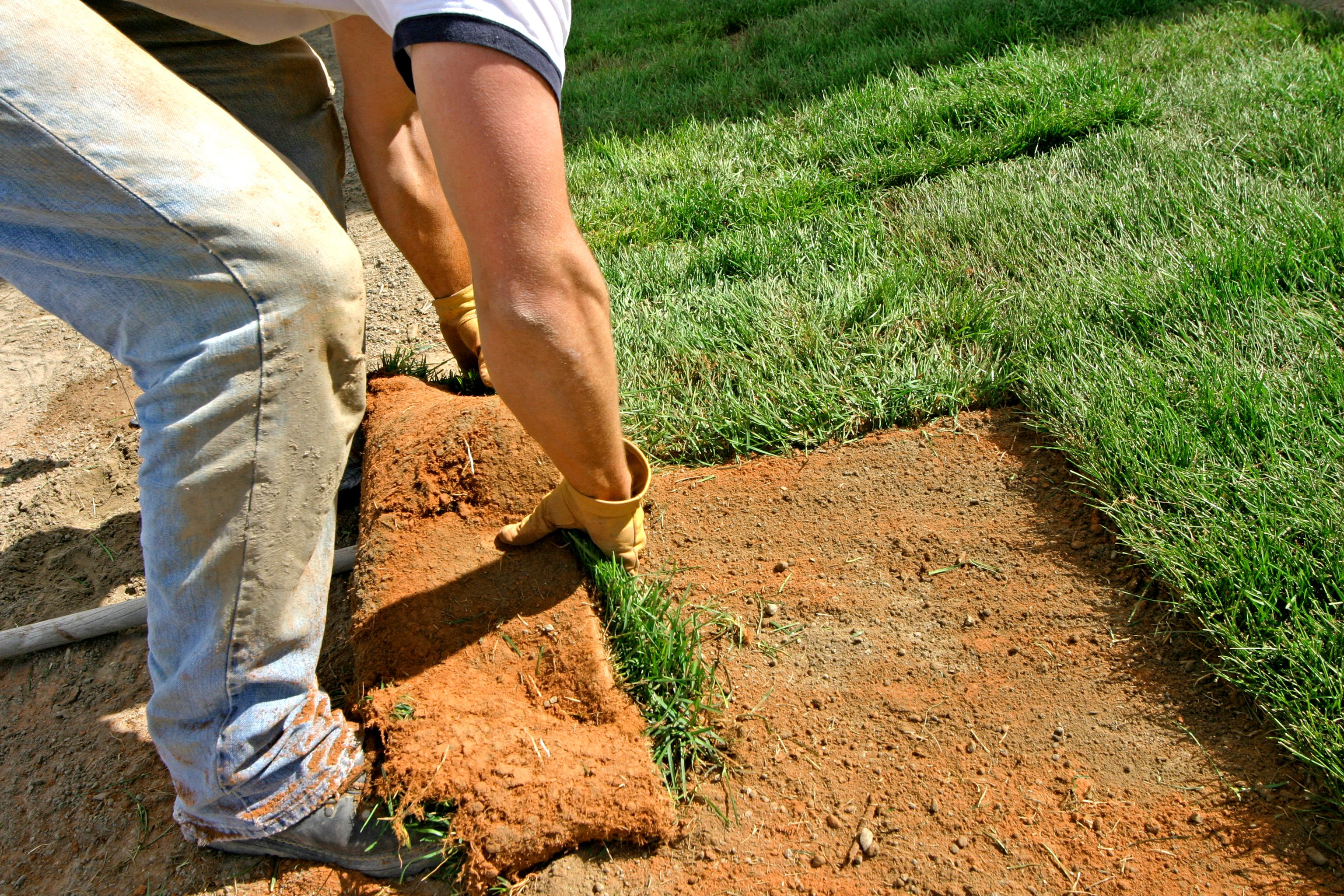 How To Lay Sod Start A New Lawn