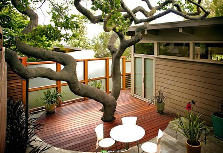 Tree for Shade - 15 Shade Ideas For Your Outdoor Space
