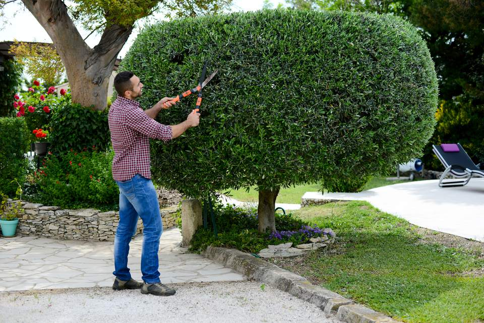 handsome young man gardener trimming and lanscaping trees with shears