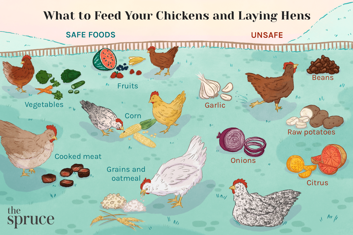 What to Feed Your Chickens and Laying Hens