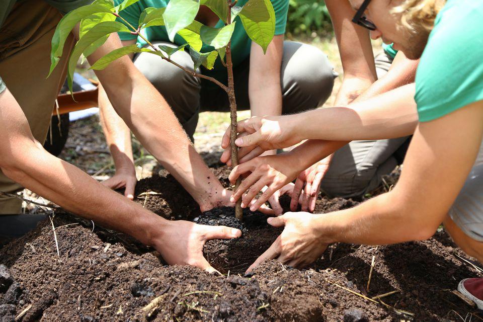 People planting tree seedling together
