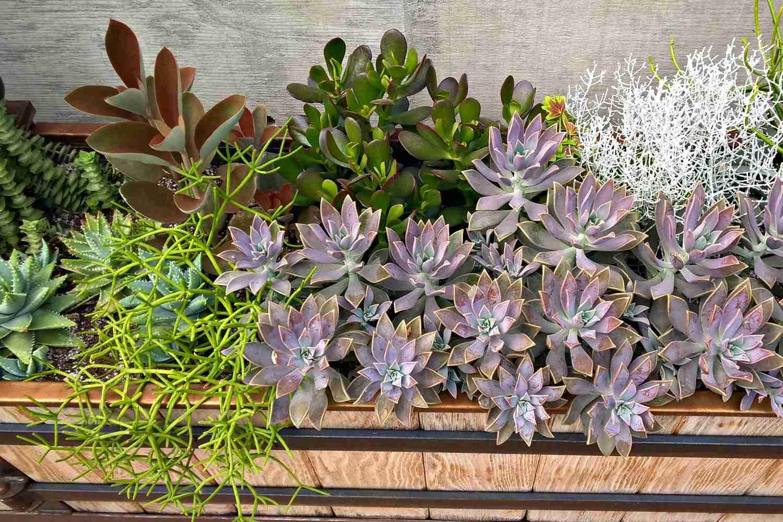 succulent window box