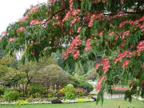 Imagen del árbol de pacana