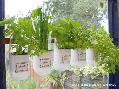 Hanging milk jug herb garden