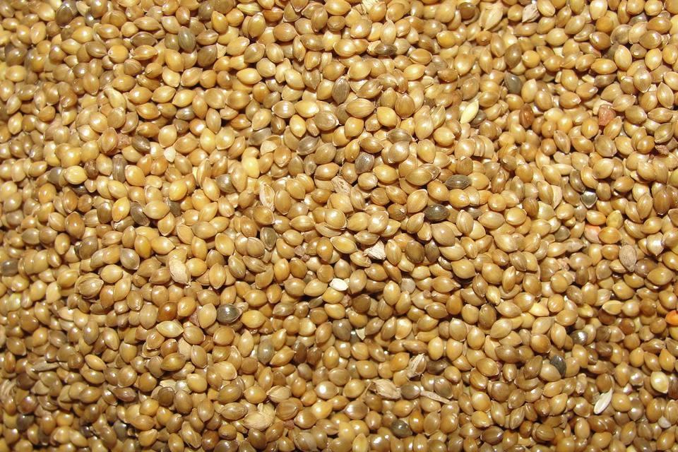 A vast pile of millet birdseed