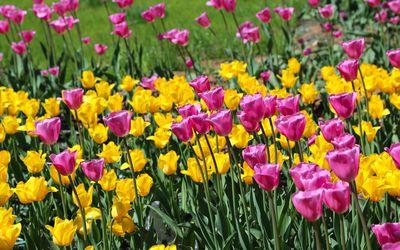 Perennial Plants Flowers