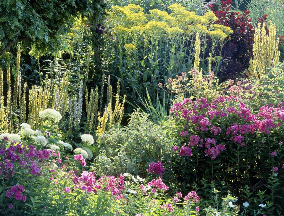 Garden at high summer containing a variety colourful flowers including phloxes