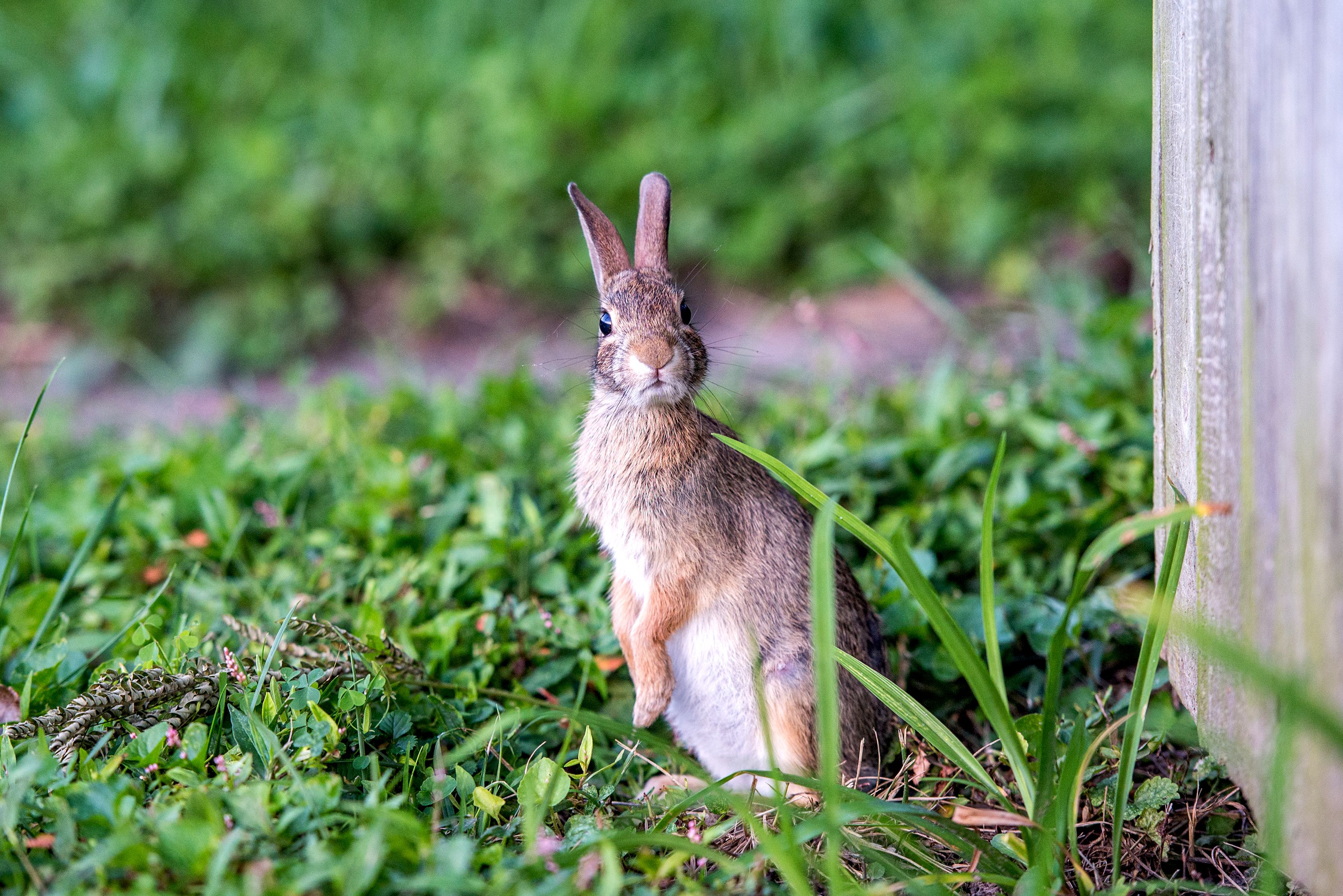 12 Ways to Keep Rabbits Out of Your Garden