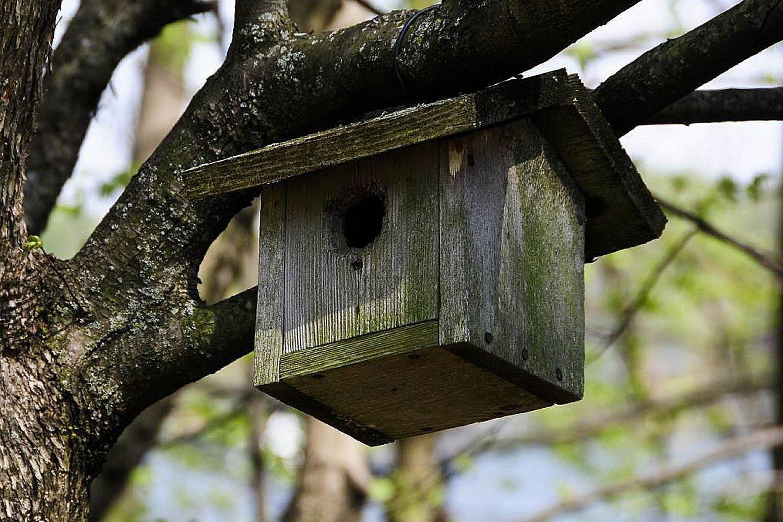 Simple Birdhouses Learn The Basics