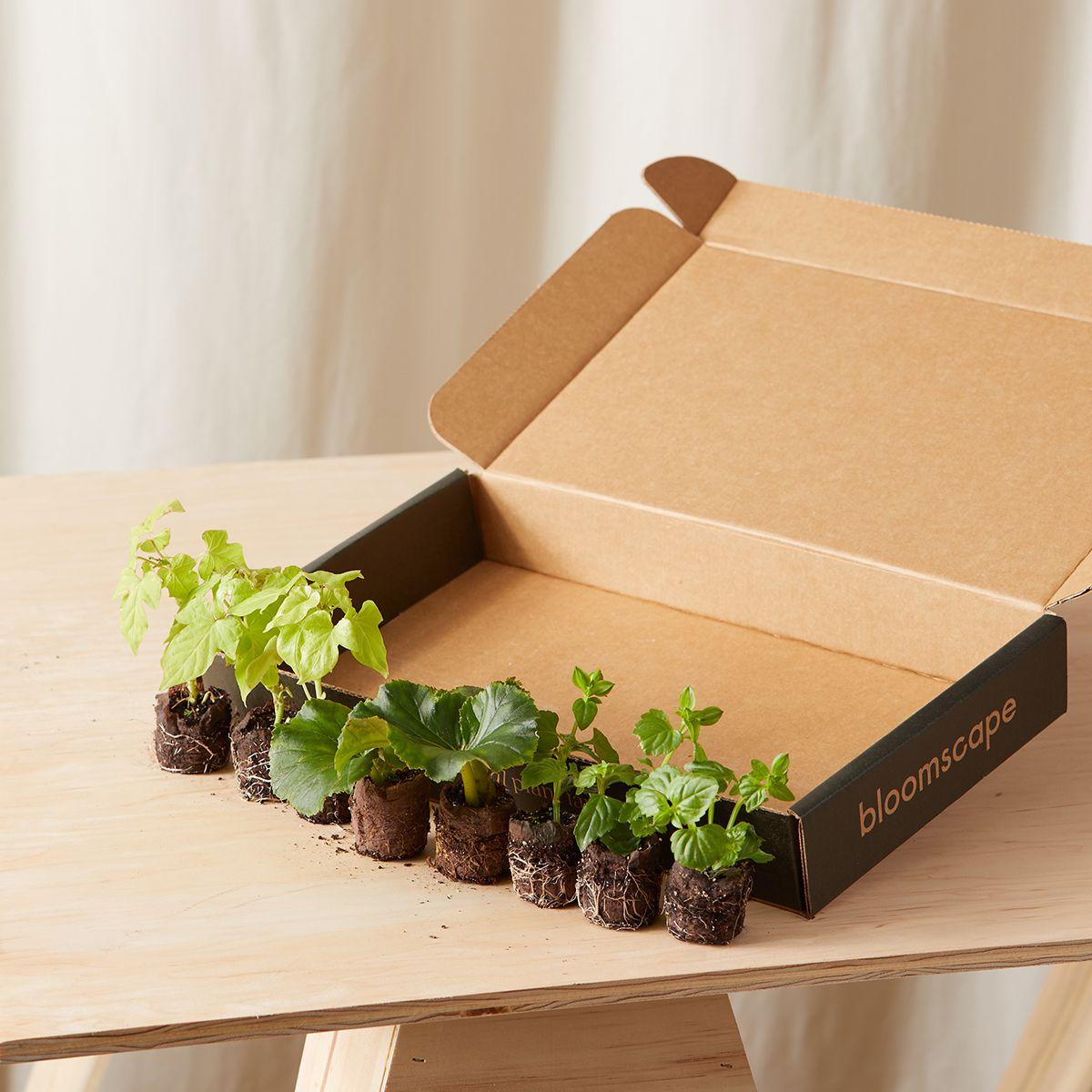 Bloomscape's Bloom Kit Combination with yellow begonia purple torenia-sweet-potato-vine