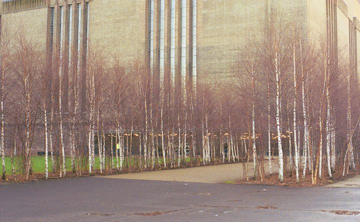 Tate Modern museum in London with young birch trees growing in front