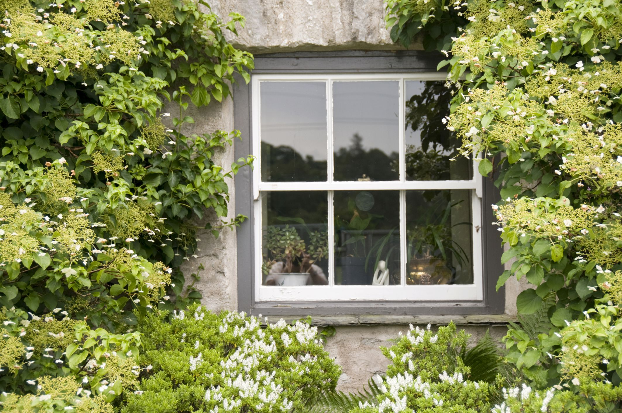 Double Hung Vs Single Windows