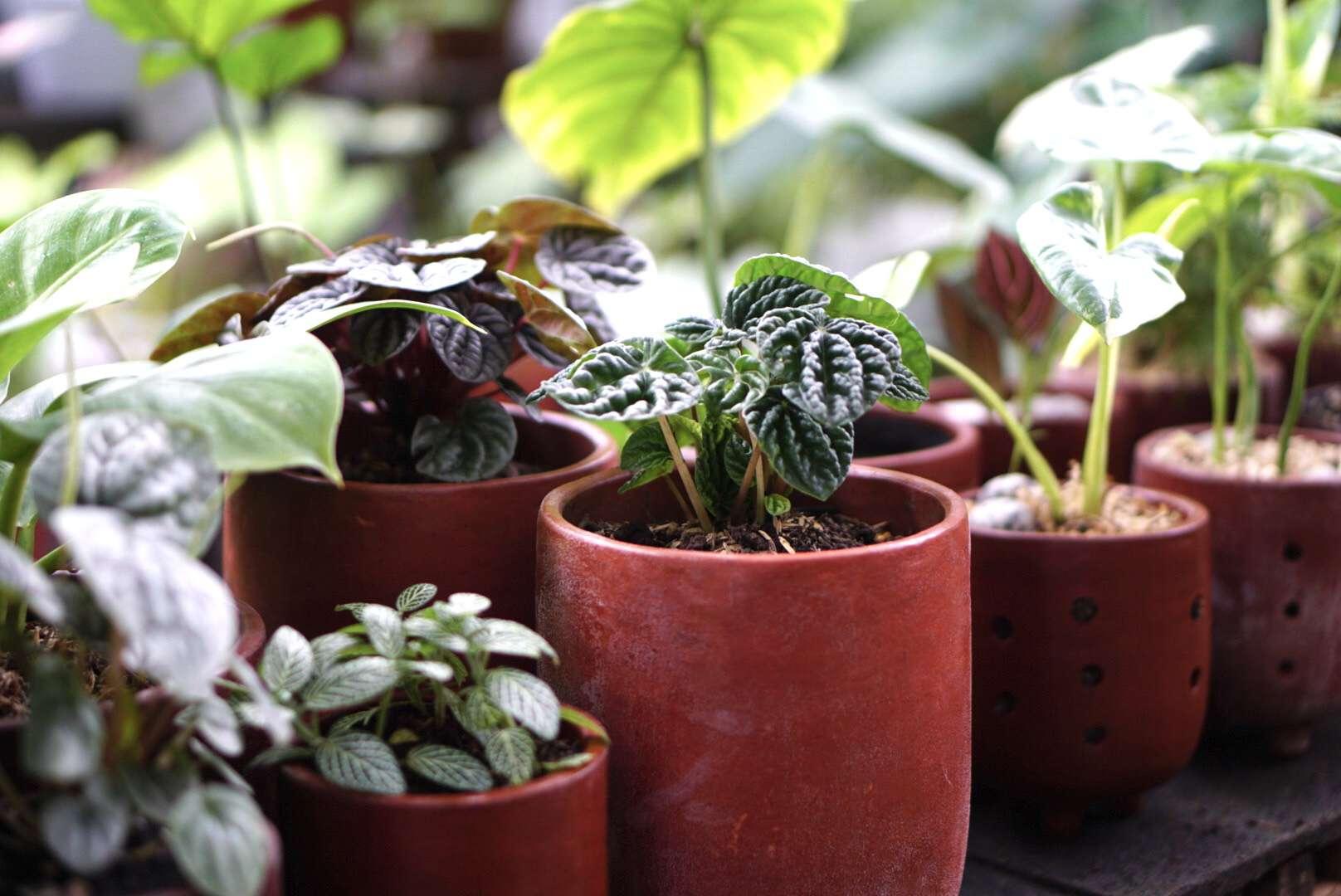light shining on plants