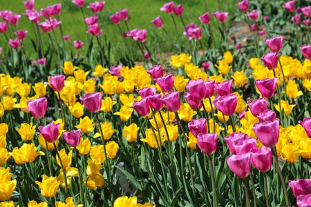 When and how to plant spring bulbs mightylinksfo